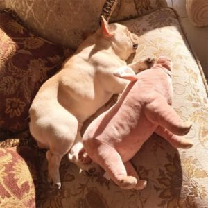 Warm and Soft Pig Shaped Toys for Dogs for Sleeping