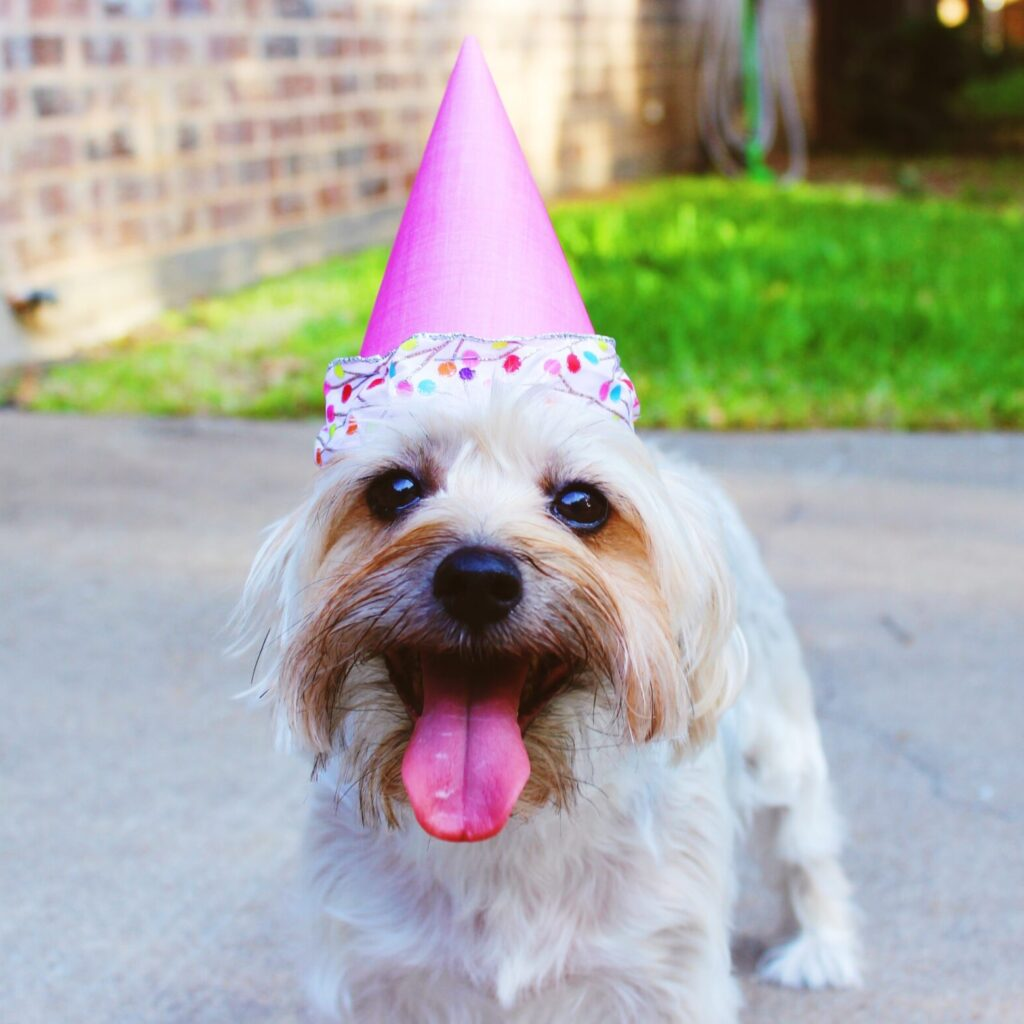 Birthday Accessories for Dogs